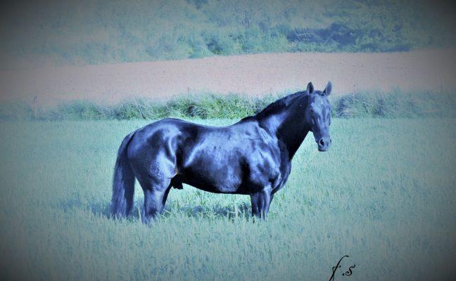 VARINO(06)-h1200